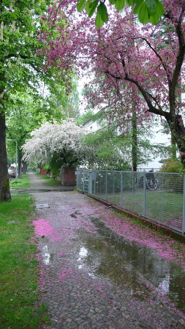 Frühlingsregen