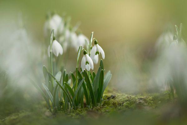 Frühlingsschaukeln