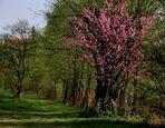 Frühlingsschwelgen