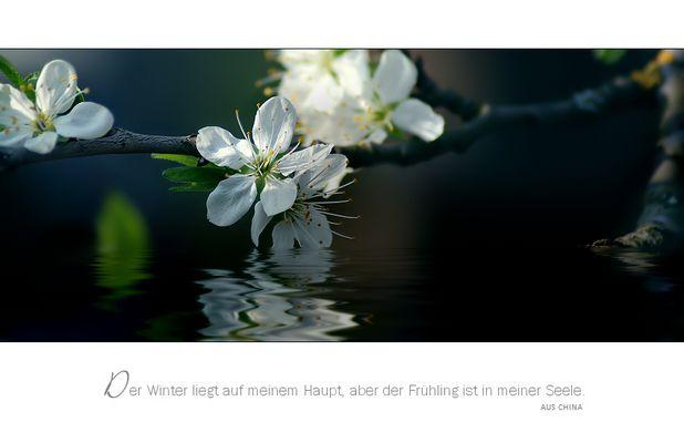 FrühlingsSeele