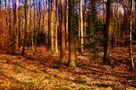 Frühlingssonne in den Bäumen de SINA