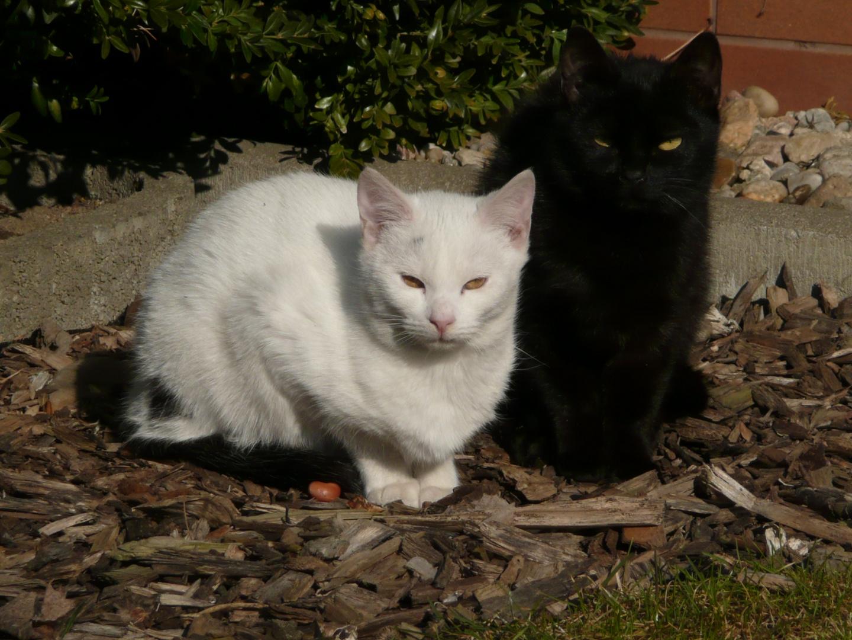 Frühlingssonne tut auch Katzen gut