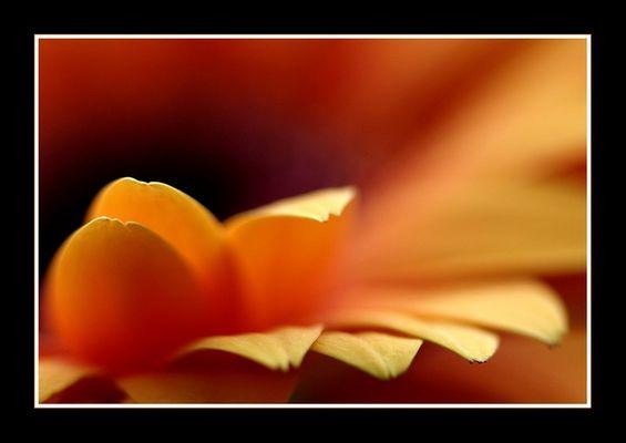 Frühlingssonnenfarben