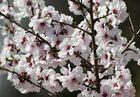Frühlingsspaziergang 1