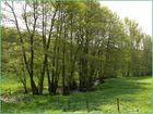 Frühlingsspaziergang 2