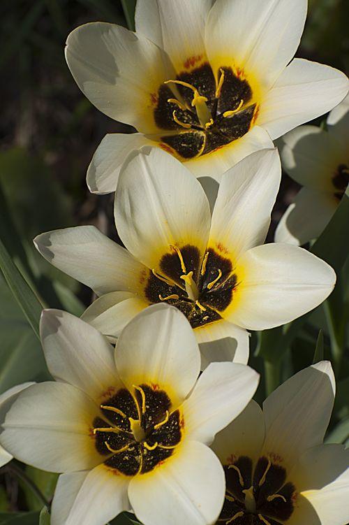 Frühlingsspaziergang 4
