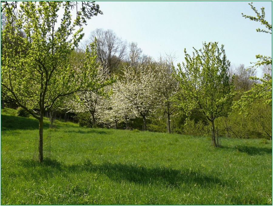 Frühlingsspaziergang 5