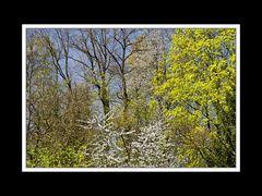 Frühlingsspaziergang von Neu- nach Altötting 07