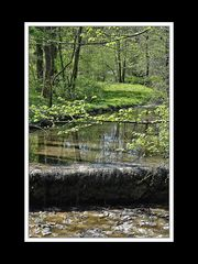 Frühlingsspaziergang von Neu- nach Altötting 08