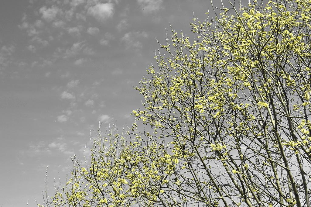 Frühlingsspielerei