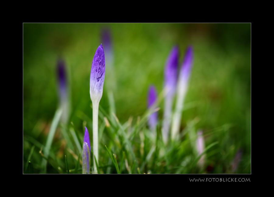 Frühlingsspuren # 10