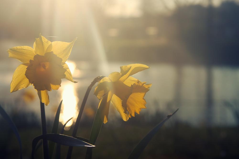 Frühlingsspuren