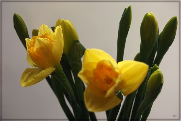 Frühlingsstimmung (2)