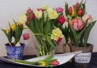Frühlingsstimmung 2