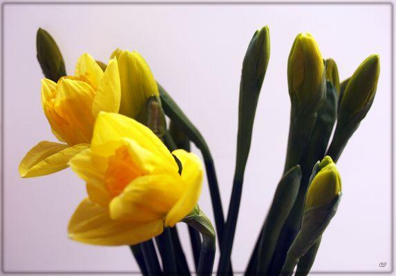 Frühlingsstimmung (4)