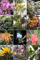 Frühlingsstimmung im botanischen Garten - Zürich