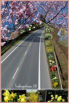 Frühlingsstrasse