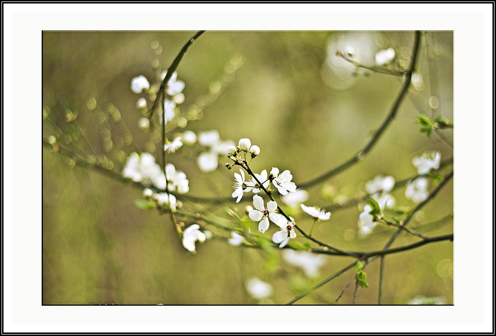 - Frühlingsstrudel -