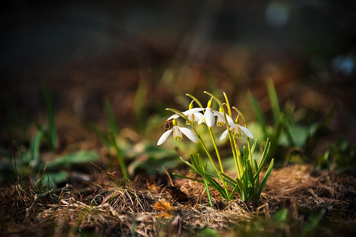 Frühlingssucher