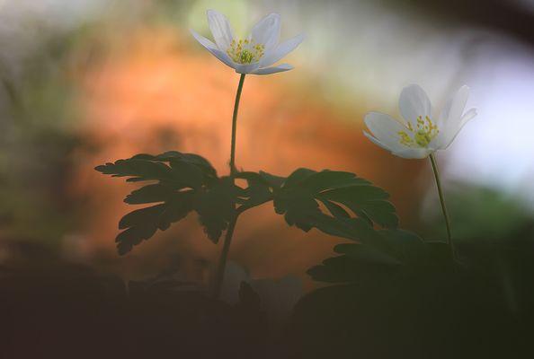 Frühlingstanz
