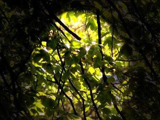 Frühlingstöne in Grün