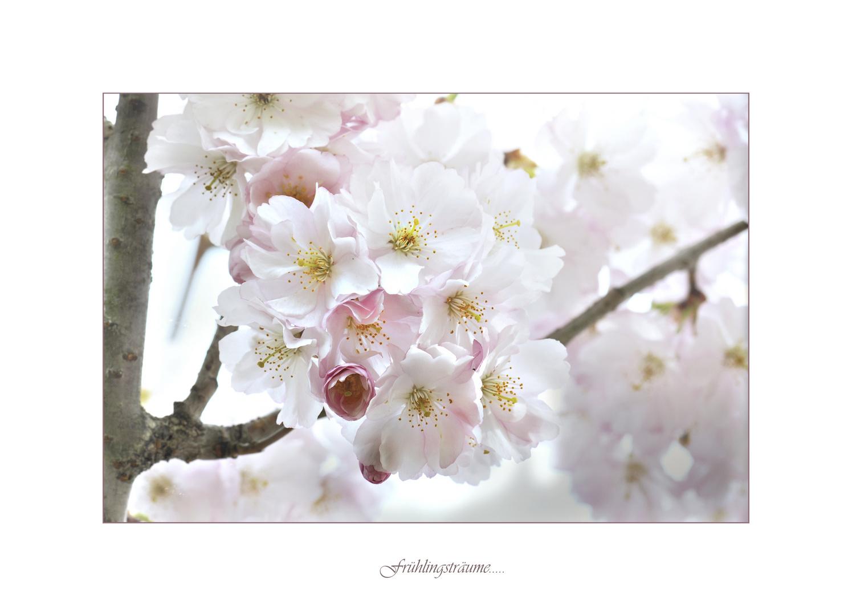 Frühlingsträume...