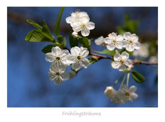 *Frühlingsträume*