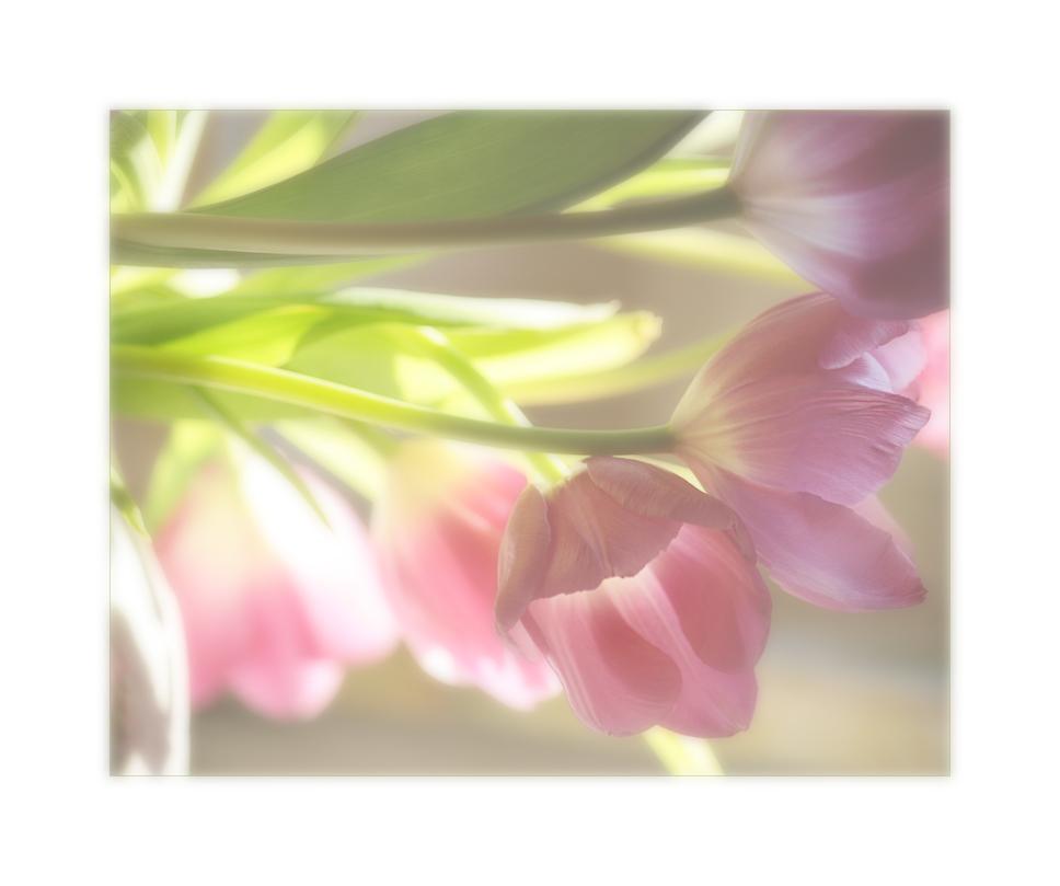 Frühlingsträume