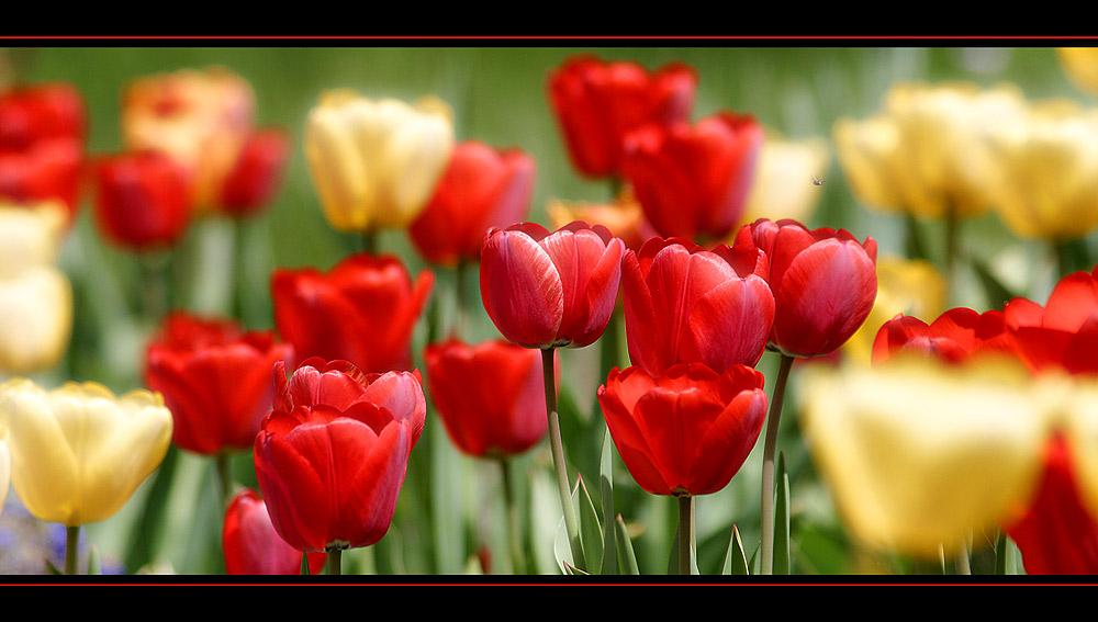 Frühlingstraum...