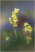 Frühlingstraum .....