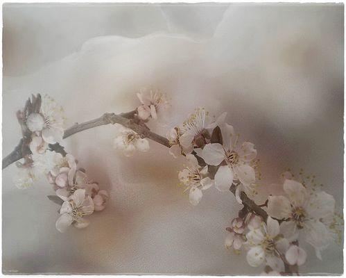 Frühlingstraum *