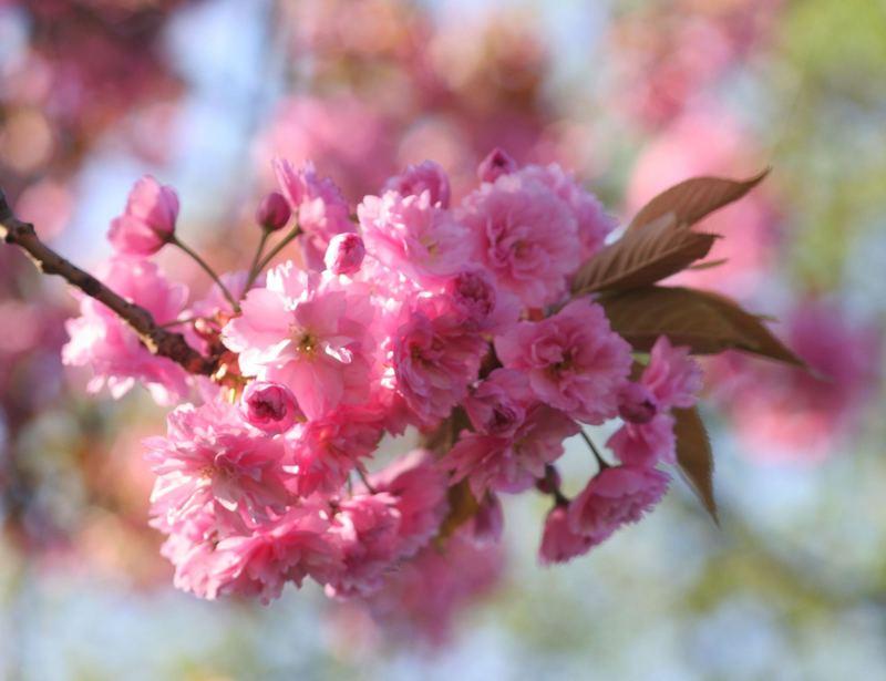 Frühlingstraum in Rosa....