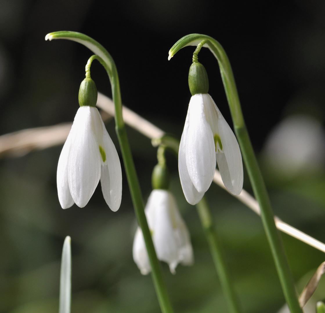 Frühlingswächter