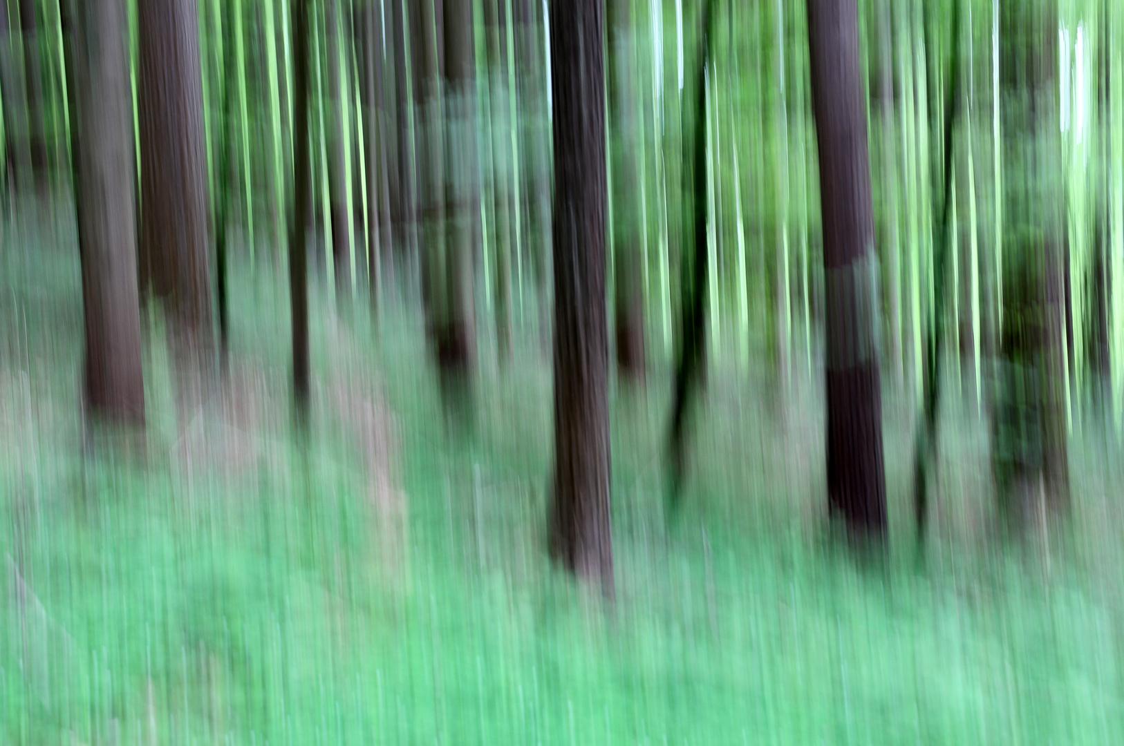 Frühlingswald 8
