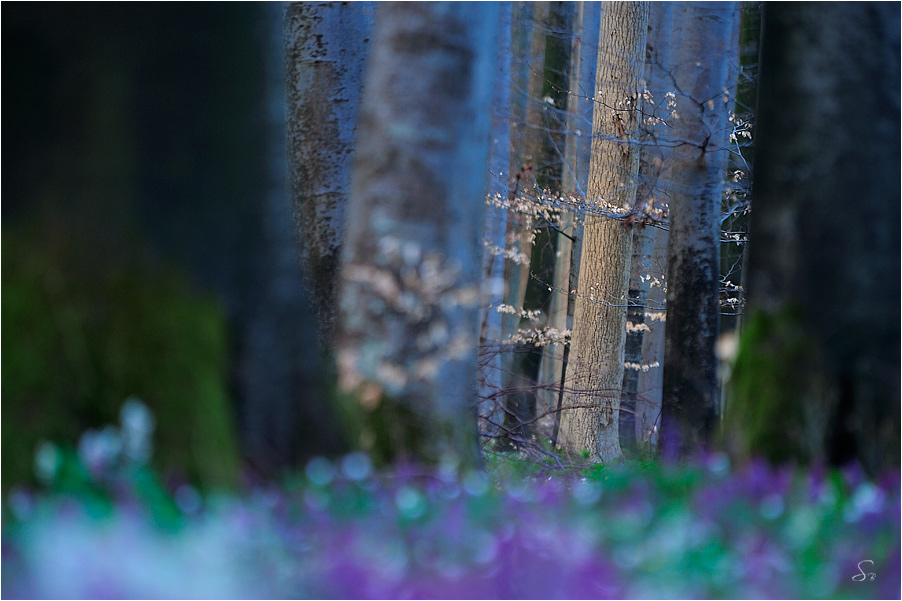 Frühlingswald in der Dämmerung