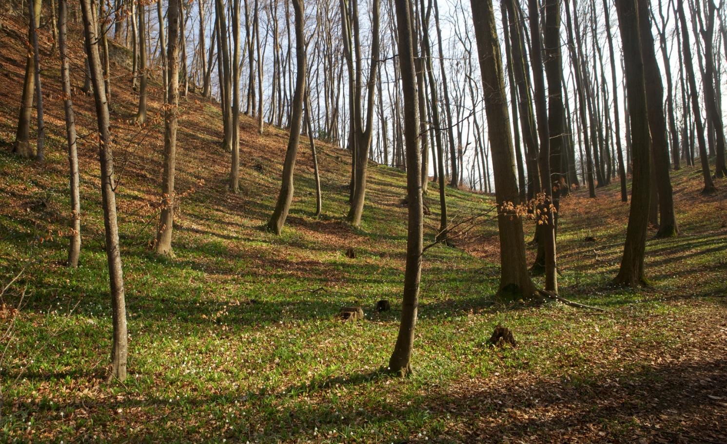 Frühlingswald - Sichtweisen