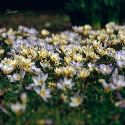 - Frühlingswiese -