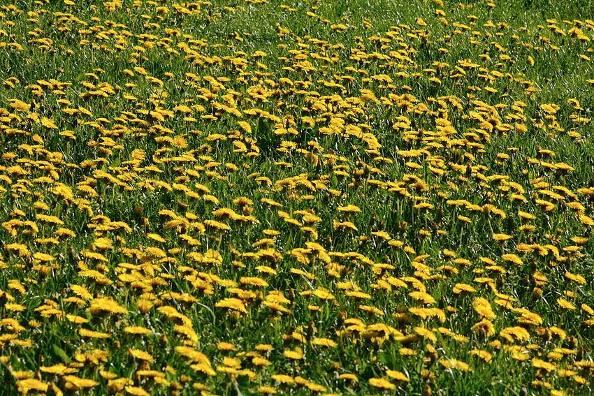 Frühlingswiese..