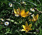 ~ Frühlingswiese ~