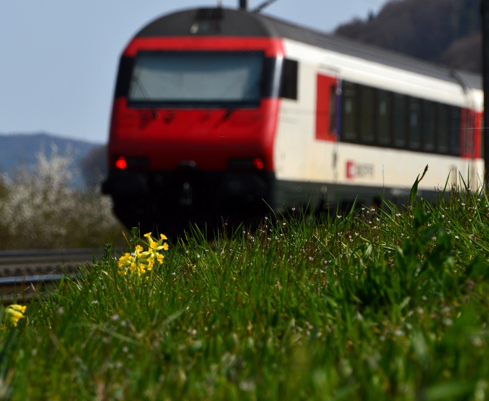 Frühlingswiese an der Strecke