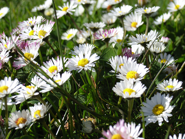 Frühlingswiese