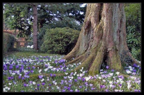 Frühlingswiese in einem Oldenburger Vorgarten