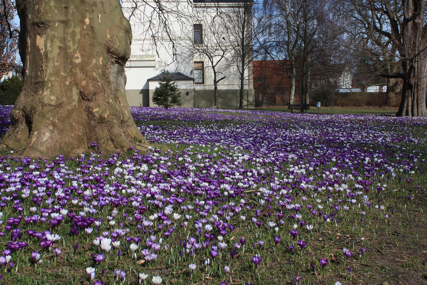 Frühlingswiese in Neustadt in Holstein