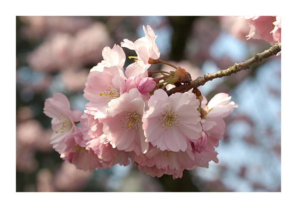 - Frühlingszart -
