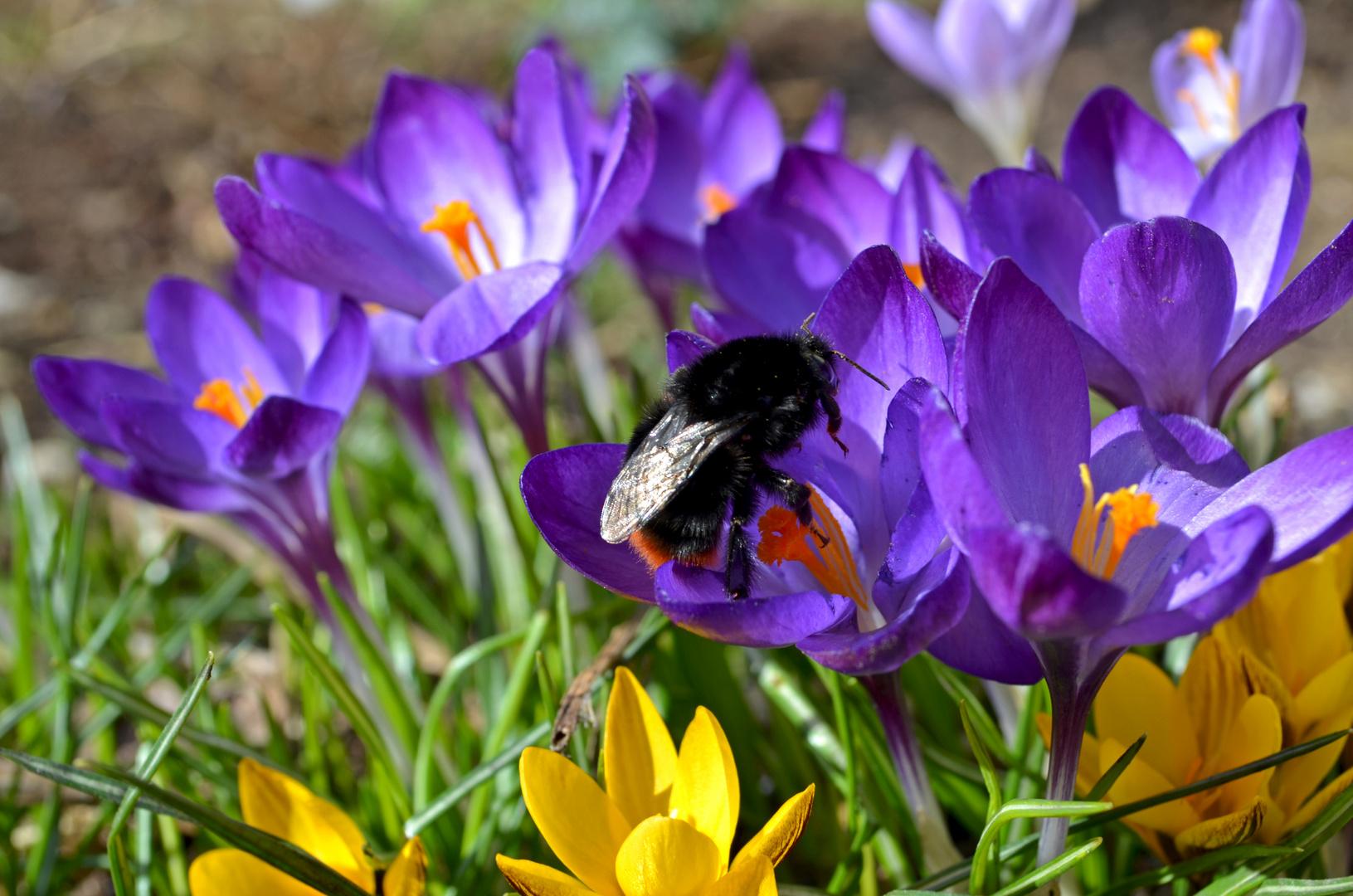~ Frühlingszauber ~