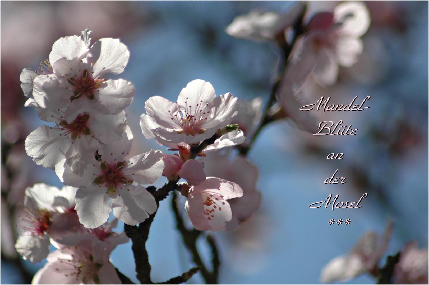 Frühlingszauber......
