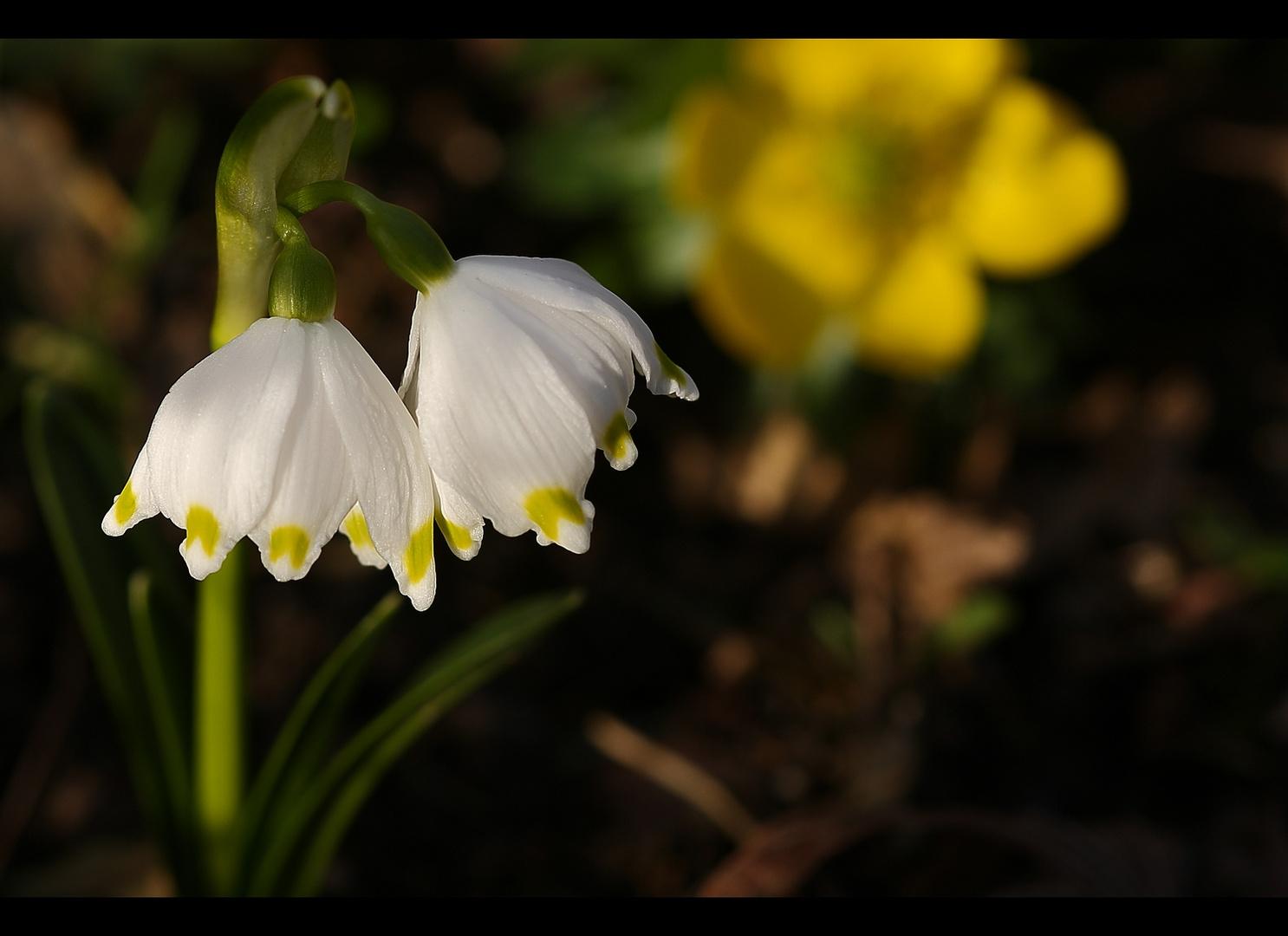 Frühlingszeichen 2