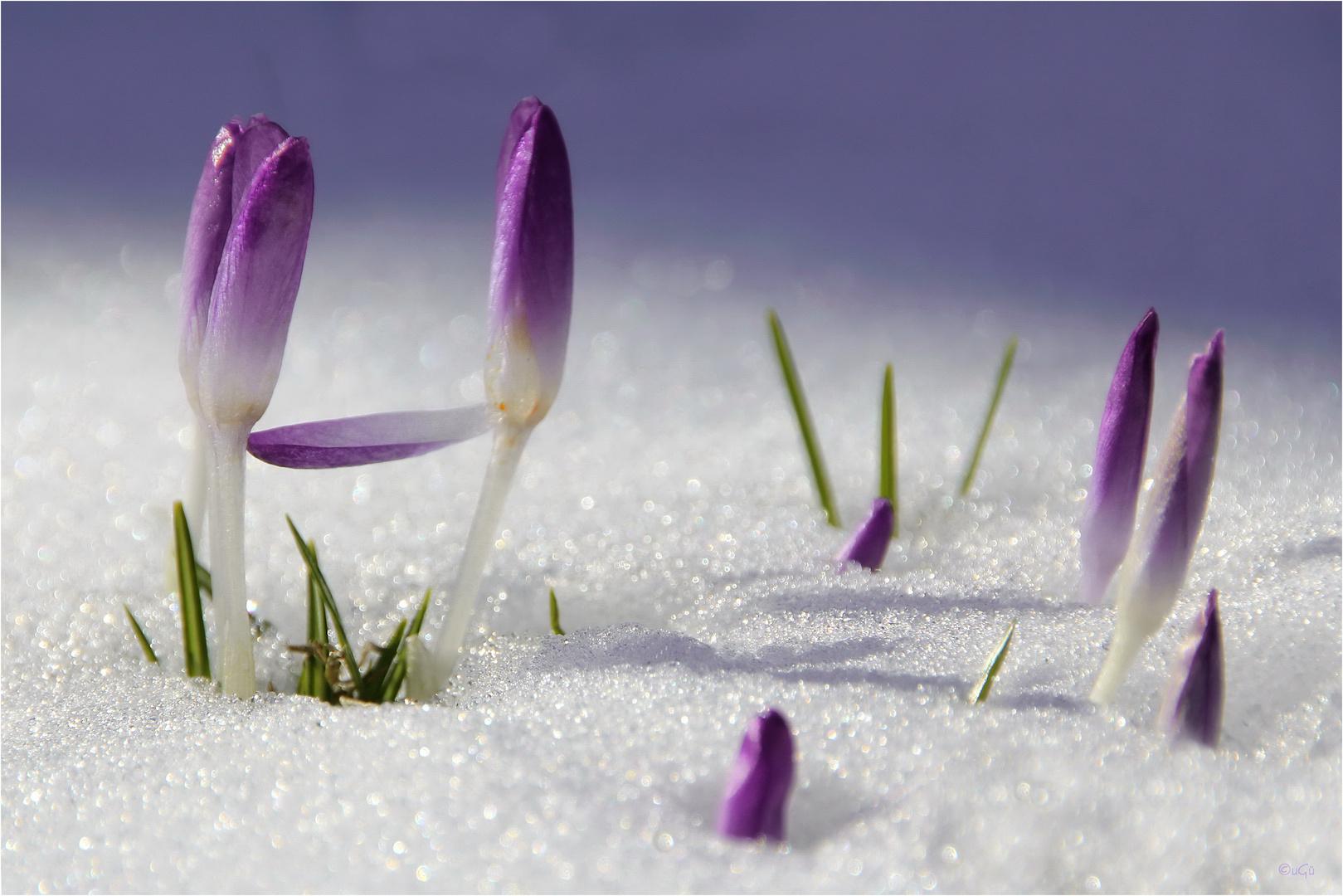 Frühlingszeichen