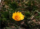 Frühlingszeichen am Huy ...