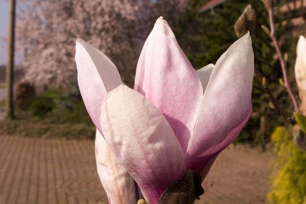 Frühlingszeit ist Blütezeit
